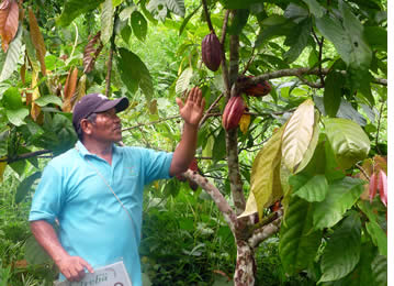Indigenous Guide of the Cacao Tour explaining what makes a good cacao pod